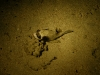 Abu Dabab Egypt 27.11.2009 3. Tauchgang Hausriff Nord (NightDive)