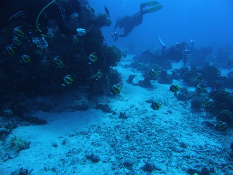 Abu Dabab 30.11.2009 Tauchgang 1  Shaab Alam Nord mit Boot