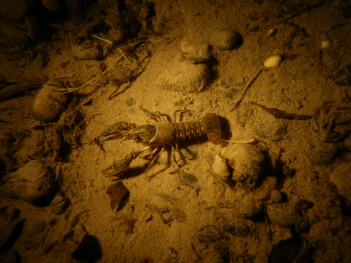 Nachttauchen Matschelsee (3.8.2010)