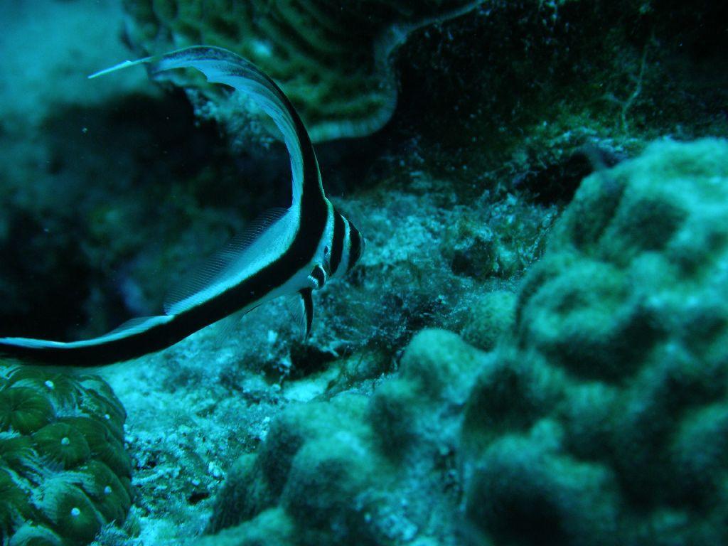 Bonaire Tauchurlaub 3. Tag 2. Tauchgang