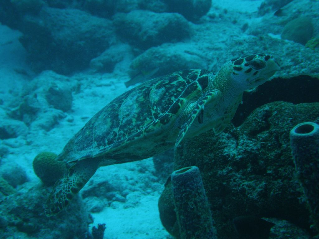 Bonaire Tauchurlaub 3. Tag 3. Tauchgang