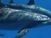 Abu Dabab 30.11.2009 Schnorcheln Shaab Alam Dolphins mit Boot